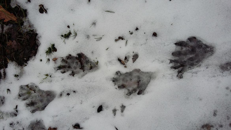 Habitants de l'hiver